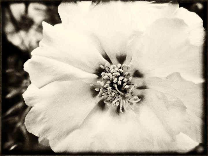 Faded White - MaryLanePhotography