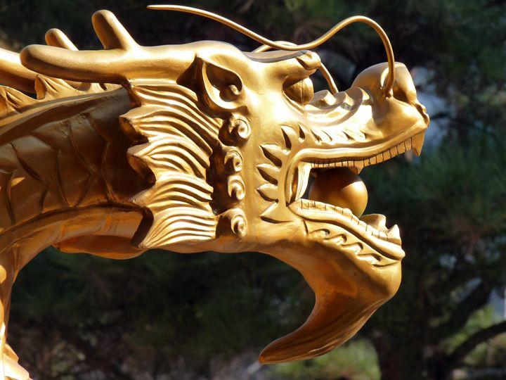 Dragon - MaryLanePhotography