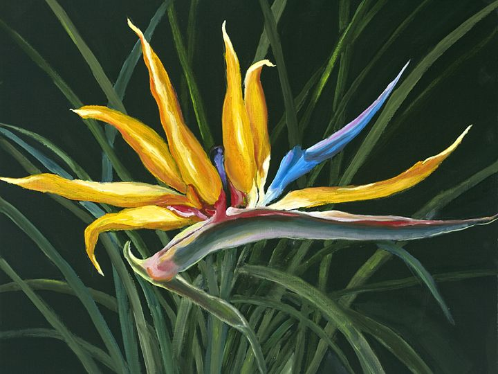 Bird of Paradise - Margies paintings