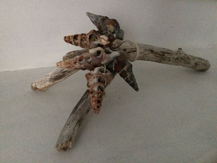 shell wood - Karl Cooke