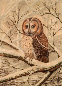 Tawny Owl in the snow