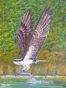 Osprey - george telford