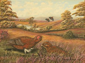 Red Grouse - george telford