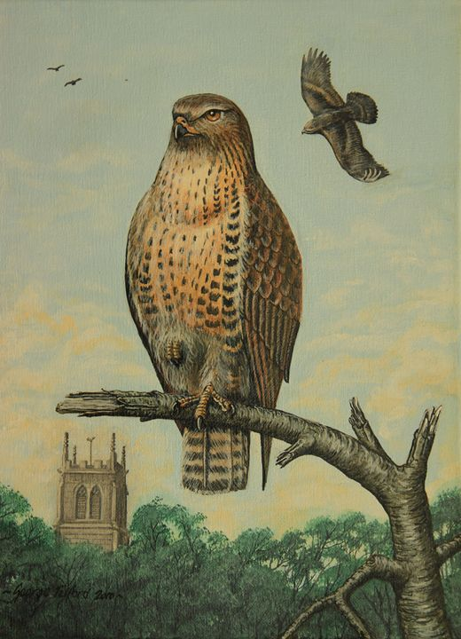 Buzzard on the Moss - george telford