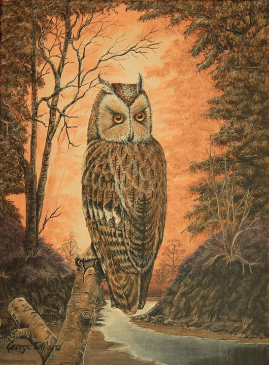 The Long Eared Owl - george telford