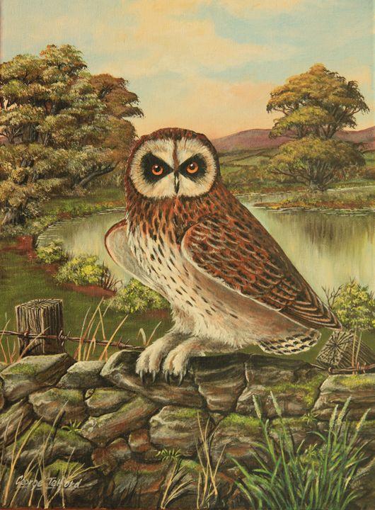 Short  Eared Owl - george telford