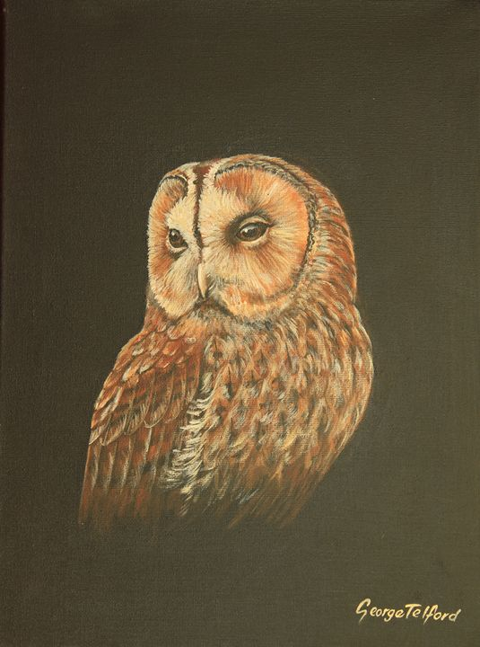 A Portrait of a Tawny Owl - george telford