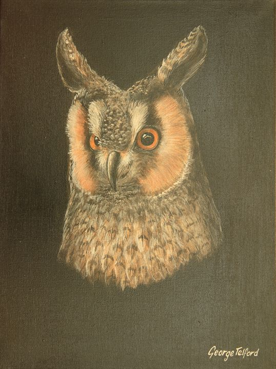 Portrait of a Long Eared Owl - george telford