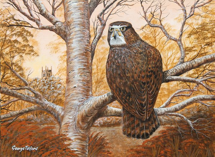 A young Buzzard - george telford