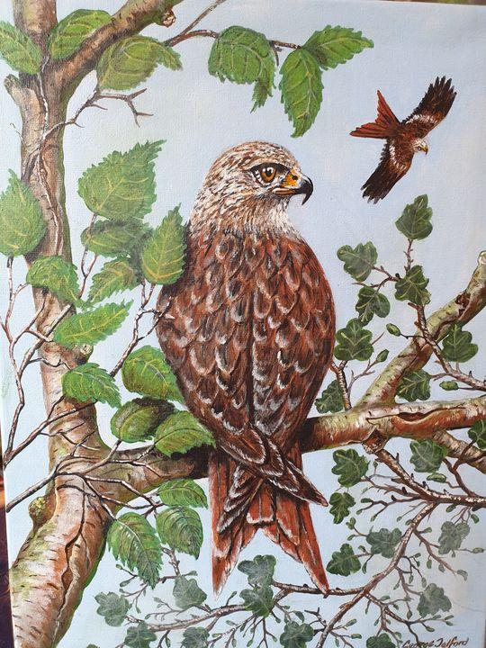 Red Kite - george telford