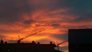 Sundown on cranes