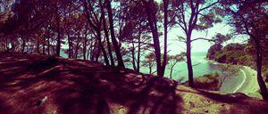 Forest Beach Italy
