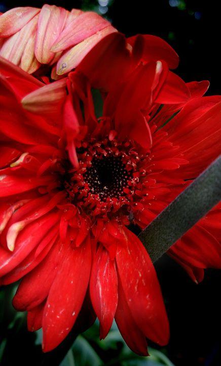 Untamed, my heart is relentless - Jason Fedor