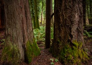 Rain Forest bottom