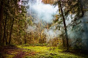 Fog in the Rain Forest