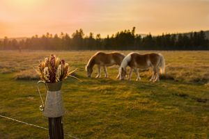 Sunset with two beautiful horses