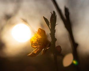 Blossom hugging the Sun at Sunset