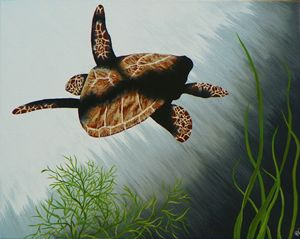 Shaded Swim Loggerhead