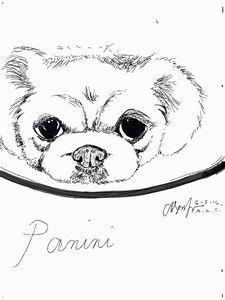 Panini (s-pen sketch)