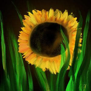 Sunflower - ISurfLikeAGirl