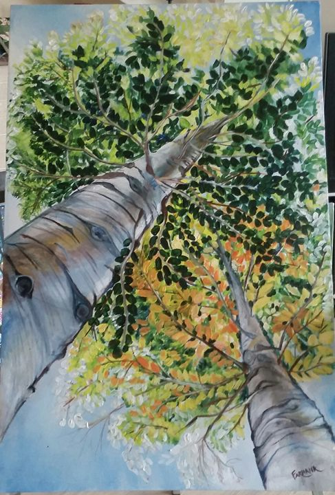 Looking up at the trees - Farhana's Gallery