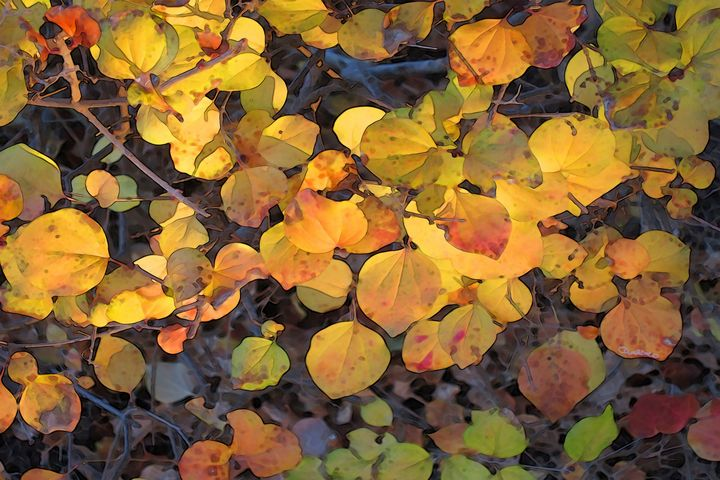 Autumn Leaves in Indiana - CMS ART