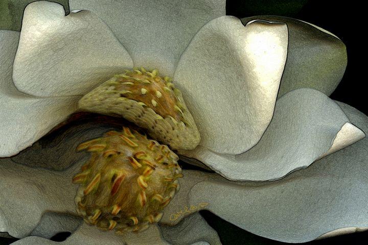 Golden Magnolia - CMS ART