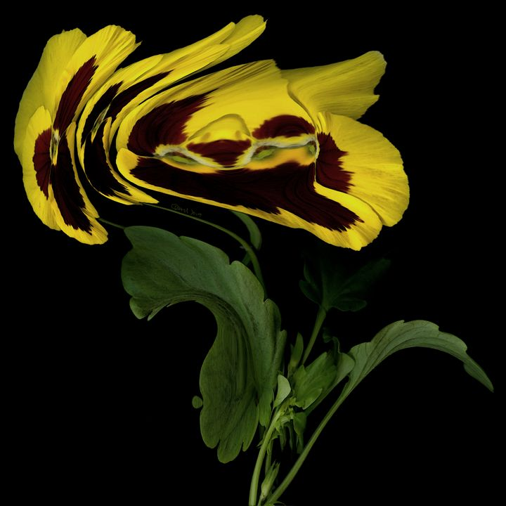 Windswept Yellow Pansies - CMS ART