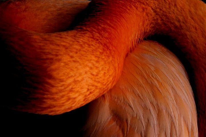 Orange Curve - CMS ART
