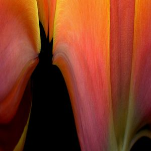 Tulip Towers