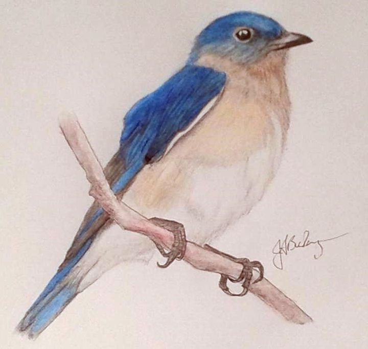 Eastern Bluebird - ArtbyJosephB