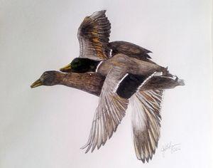 Mallards Flying - ArtbyJosephB