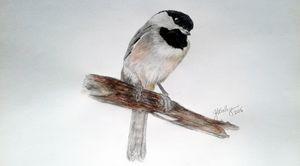 Chickadee - ArtbyJosephB