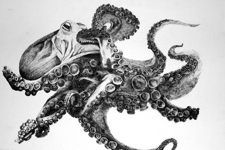Octopus - Alexa Raniuk