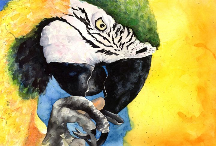 Macaw - Alexa Raniuk