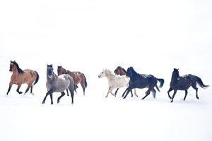 Frosty Run