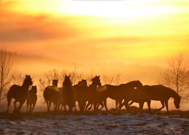 Sunset Run - Megan Thompson Photography