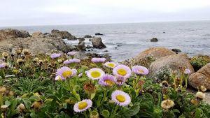 Wildflowers at Spanish Bay - BC Designs