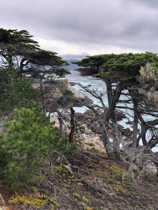 Pebble Beach Trees - BC Designs