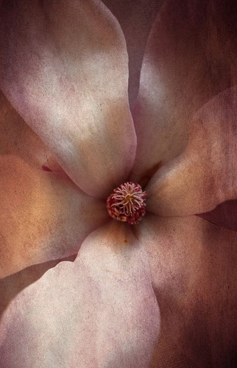 Textured Pink Flower - Photography By Helen
