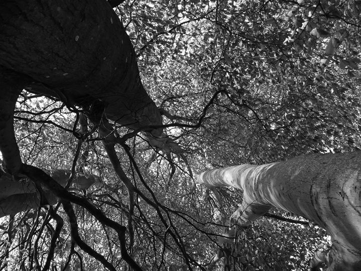 Trees - Anna Cartwright Photography