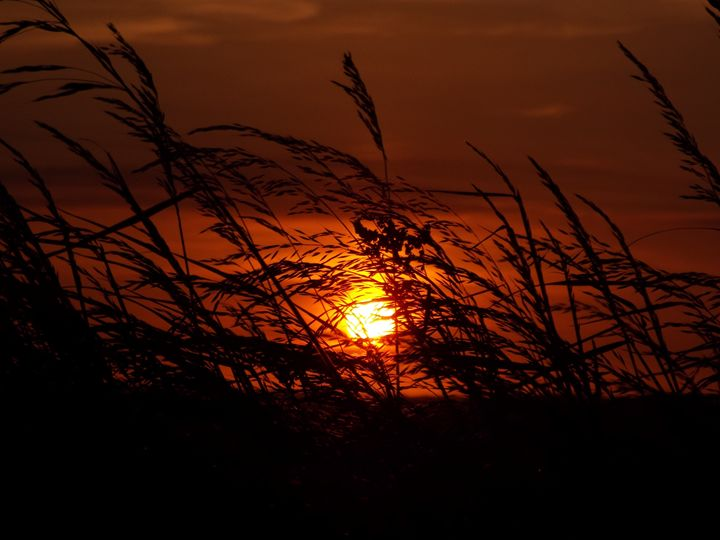 Sunset through the Weeds - Anna Cartwright Photography