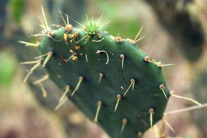 Nature: Cactus