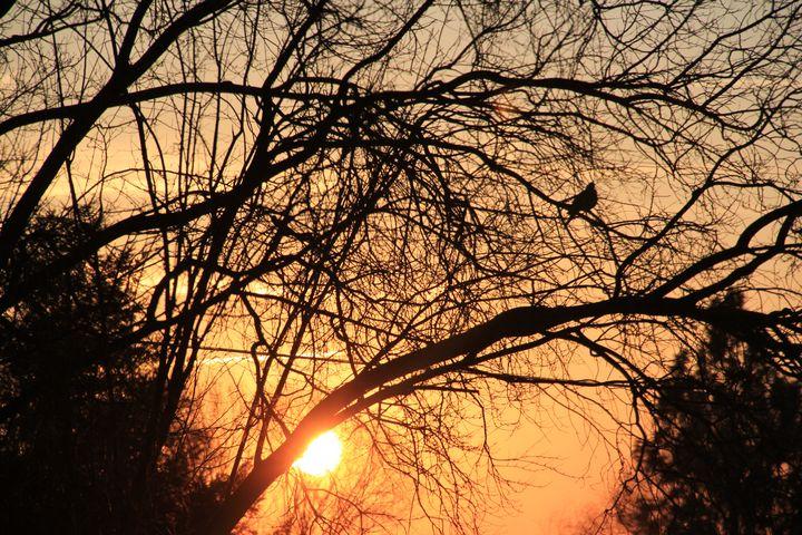 Early Bird - Keribleu Art