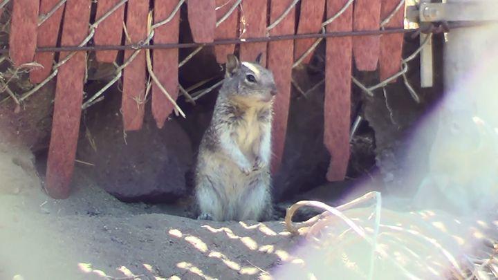 Gazing Squirrel - Xena Warrior Princess Fan