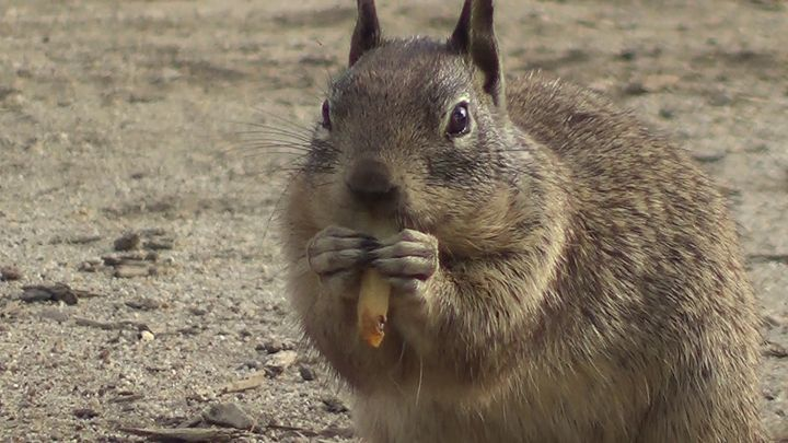Squirrel eating good - Xena Warrior Princess Fan