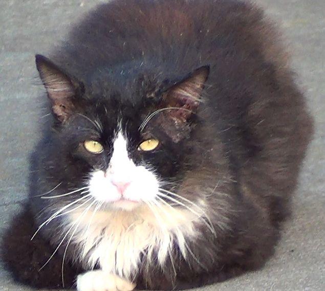 Chester the Cat - Xena Warrior Princess Fan