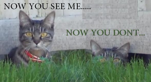 Scaredy Cat - Xena Warrior Princess Fan