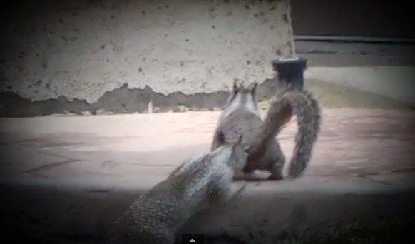 Squirrel encounter - Xena Warrior Princess Fan