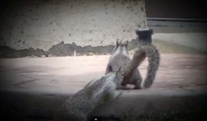 Squirrel encounter